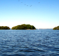 The bird population was abundant and active on the islands buffeting the main channel.