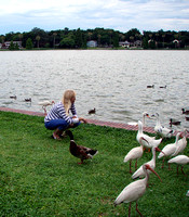 ...while Kathy focused on the land lovelies (the geese were her favorites).
